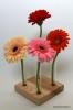 Dekoratīva koka vāze (4 ziediem)
